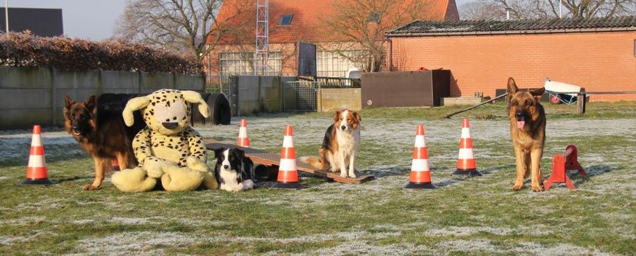 Hondenschool de roedel