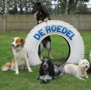 4 honden bij een band met opschrift de roedel